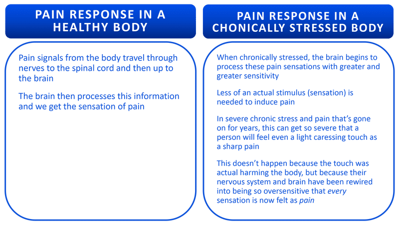 Infogrphic of how pain response triggers a healthy and a chronically stressed body │Why Stress Causes Fatigue And How To Overcome Stress, www.theenergyblueprint.com