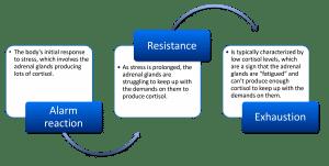 The body s stress response
