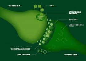 Image of the endocannabinoid system │ Why Stress Causes Fatigue And How To Overcome Stress, www.theenergyblueprint.com