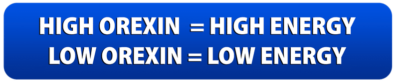 High orexin = High Energy, Low Orexin = Low energy │ Science Answers, Why Do Energy Drinks Make Me Tired?,www.theenergyblueprint.com