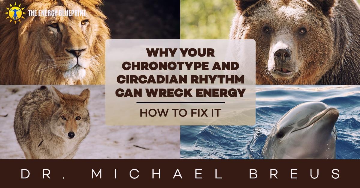 bear chronotype exercise