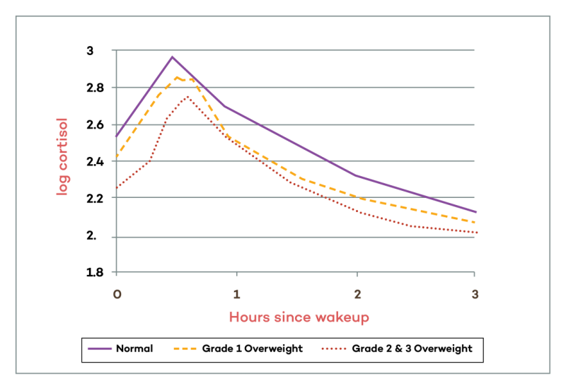 How Obesity Affects Cortisol Levels Graph │ Is Adrenal Fatigue Real?, theenergyblueprint.com