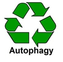 Autophagy icon │ why am I so tired, theenergyblueprint.com