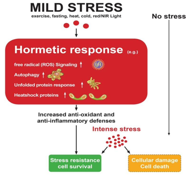 How stress affect the body - red light therapy, theenergyblueprint.com