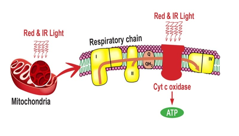 Red light therapy - impact on ATP production, theenergyblueprint.com