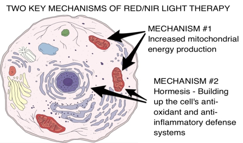 Two key mechanisms of near infrared and red light therapy, theenergyblueprint.com