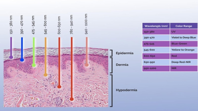 penetration range of different wavelengths │ red light therapy, theenergyblueprint.com
