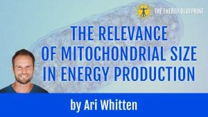Mitochondrial_Size